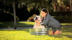 Young Girl Bathing her Pet Bulldog Stock Footage