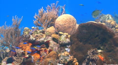 Colorful coral reef Stock Footage