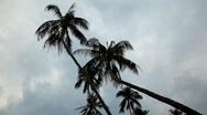 Palm Tree, Tropical Paradise Island, Ko Samui, Amazing Thailand Stock Footage