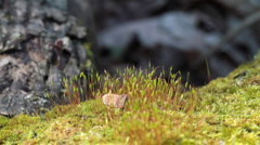 Moss in spring forest. shot with slider shot. Stock Footage