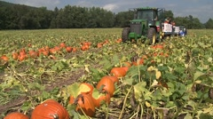 Workers Putting Pumpkins on a Truck in the Pumpkin Patch Stock Footage