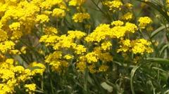 Flowers in Garden Stock Footage