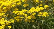 Stock Video Footage of Flowers in Garden