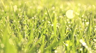 Morning Dew on blades of Grass (1) Stock Footage