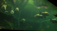 Stock Video Footage of Huge Fish at a Zoo's Aquarium