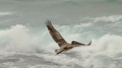 Pelican Flying Slow Motion (HD) Stock Footage