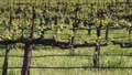 new growth vineyards 7268 Footage