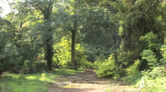 Italy Liguria path into woods Stock Footage