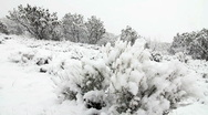 Stock Video Footage of Snow Falling on Sagebrush and Cedar Trees HD-P 0101