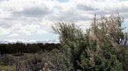 Stock Video Footage of Wind Blowing  Sagebrush with Clouds and Mountains HD-P-0369