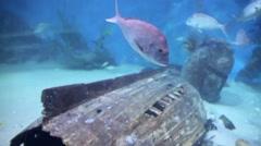 Fish Aquarium Stock Footage