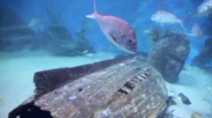Fish Aquarium HD Stock Footage