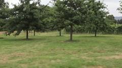 Vineyard Driving HD Stock Footage