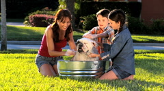 Family Bulldog Grooming by Mom & Children Stock Footage
