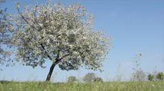 Spring tree and meadow Stock Footage