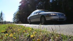 Car passing Coltsfoot flowers Stock Footage