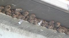 Bridge Bird Nests Stock Footage