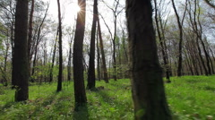 Forrest run, running animal's eyes point of view 4 Stock Footage