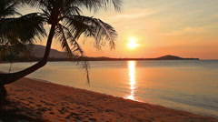 sunset and beach with coconut palm - stock footage