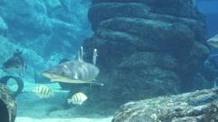 Shark Aquarium Stock Footage