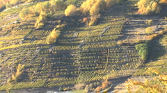 Italy zooms from Lombardy vineyards Stock Footage