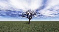 Tree grow Stock Footage