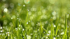 Green grass and drops of morning dew Stock Footage