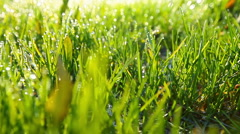 green grass and drops of morning dew - stock footage