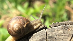 snails spring with light of spring - stock footage