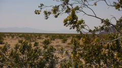 The Mojave Desert Preserve in CA - over the dry flats - 3  - stock footage