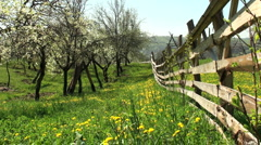 Spring flower Stock Footage
