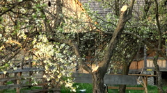 Spring flower Stock Footage
