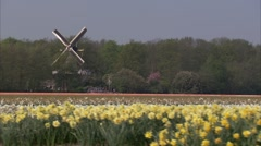 Flower field Windmill#1 Stock Footage
