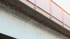 Hundreds Of Bridge Bird Nests Stock Footage