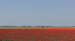 Travelshot bulb fields red tulips Stock Footage