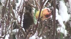 Bird in the snow Stock Footage