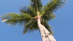 Underneath palm tree. - stock footage