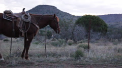 Horse Resting in Front of Barbed Wire Fence Stock Footage