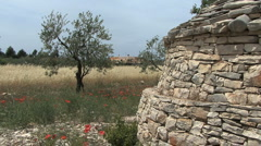 Pulia trulli field hut with olive trees - stock footage