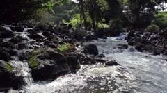 Jungle Stream Stock Footage