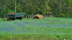 Windy wild flower field at farm 02 Stock Footage