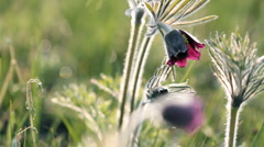 Meadow flowers. Shot with slider shot. Stock Footage