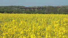 Yellow flowers of oil seed rape with train crossing a viaduct in the background Stock Footage