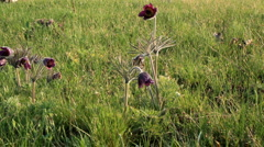 Timelapse meadow flowers. Shot with slider shot. Stock Footage