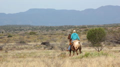 Cowgirl in Teal Crossing Field to Cattle Drive Stock Footage