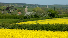 Fields of yellow oil seed rape with towers of village churches England Stock Footage