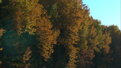 Boreal forest fall colour Stock Footage