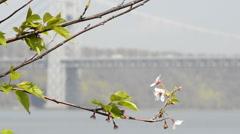 GW Bridge in spring 1 Stock Footage