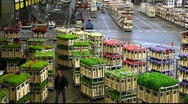 Stock Video Footage of Aalsmeer Flower Auction Market in Holland