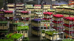 Aalsmeer Flower Auction Market in Holland - stock footage